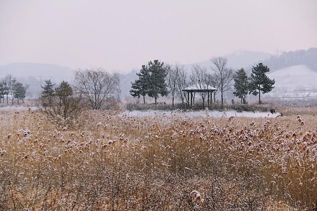 zasněžené pole